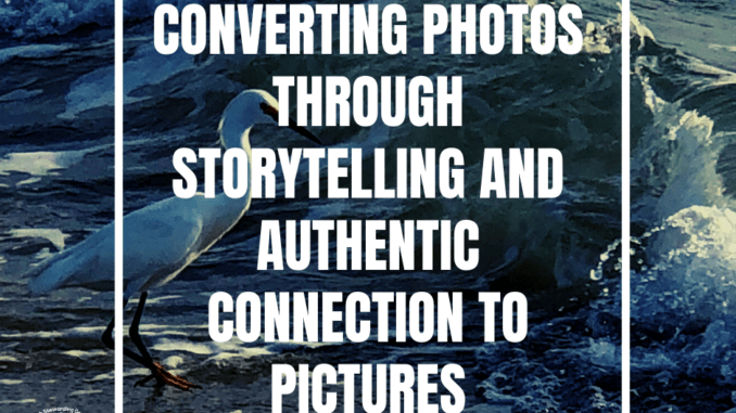 Text over a bird and the ocean that rads converting photos through storytelling