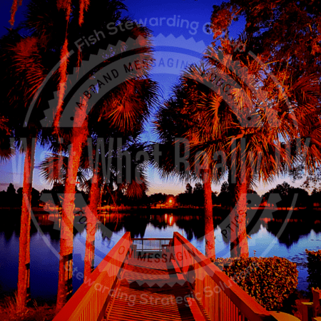 Image of a dock right before sunrise with palm trees